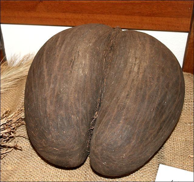 Coco-fesses, île de Praslin !