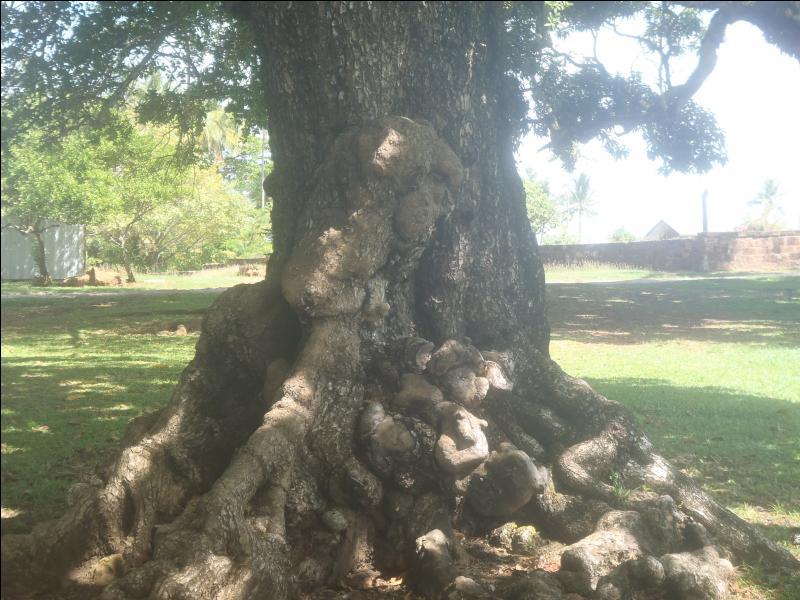 Qui a dit : On demande homme-tronc pour fondation arbre généalogique ?