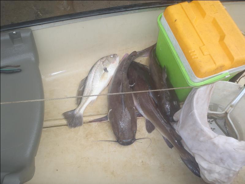 Terminez ce proverbe thaïlandais : Quand l'eau baisse, les fourmis mangent les poissons ; quand l'eau monte ...