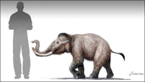 Quel est ce petit éléphant malheureusement disparu ?