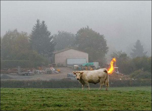 De quoi serait responsable le bétail terrestre ?