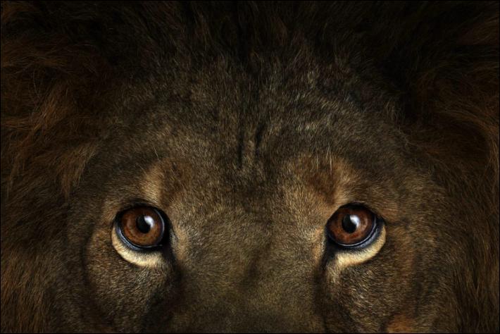 Où se situe l'action du roman  Le Lion , de Joseph Kessel, dans lequel un K'morane combat King, le lion de Patricia ?