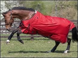 C 'est quoi se que porte le cheval sur la photo.