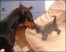 Quel auteur s'étant aperçu que le chat se considère souvent comme le  roi  du foyer a écrit : « Le chat semble mettre un point d'honneur à ne servir à rien, ce qui ne l'empêche pas de revendiquer au foyer une place meilleure que celle du chien » ?