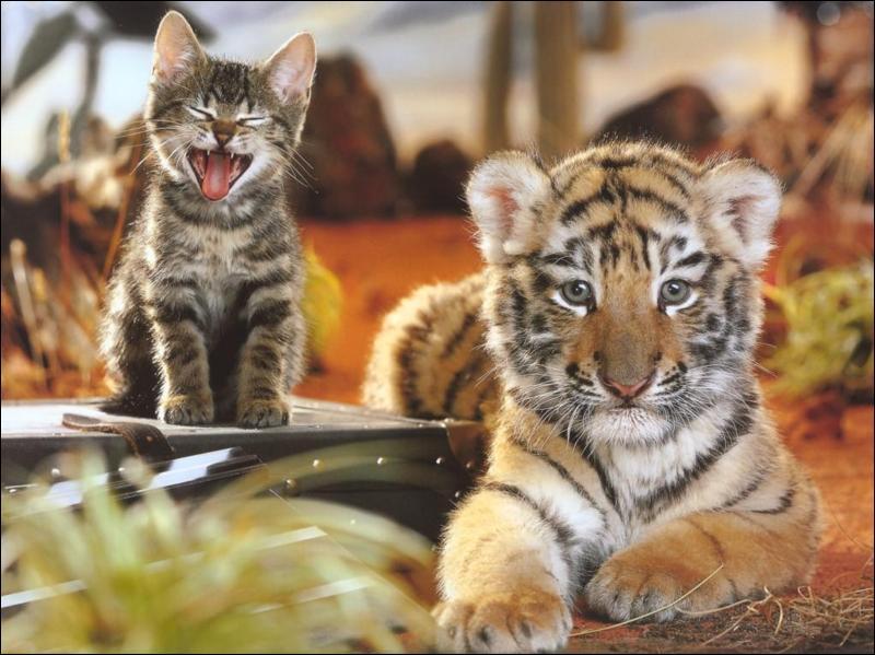 Quel poète sûrement plongé dans la  contemplation  d'un chat a écrit :  Dieu a inventé le chat pour que l'homme ait un tigre à caresser chez lui  ?