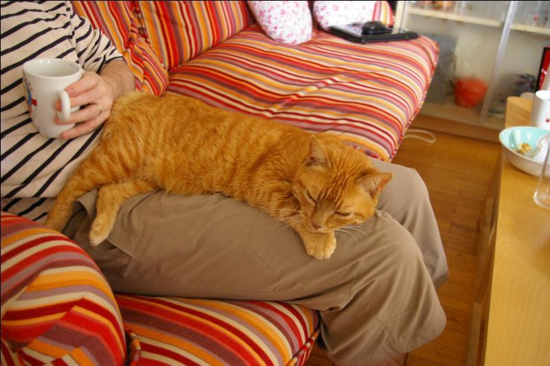 Quel auteur qui aurait pu consacrer un  roman  aux chats plutôt qu'à une  momie  a écrit :  Conquérir l'amitié d'un chat est chose difficile. C'est une bête philosophique, rangée, tranquille, tenant à ses habitudes, amie de l'ordre et de la propreté, et qui ne place pas ses affections à l'étourdie » ?