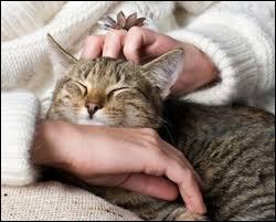 Quel poète ayant dû  lire tous les livres  en compagnie de chats a écrit :  Les chats sont des êtres faits pour emmagasiner la caresse  ?