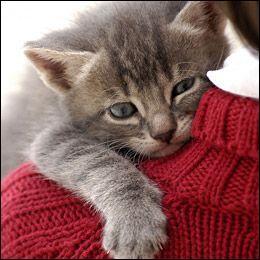 Quel auteur ayant fondé  de grandes espérances  sur les chats a écrit :  Est-il plus beau cadeau que l'affection d'un chat ?   ?