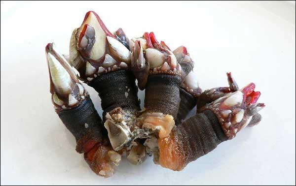 Quel est le nom de ce crustacé ?