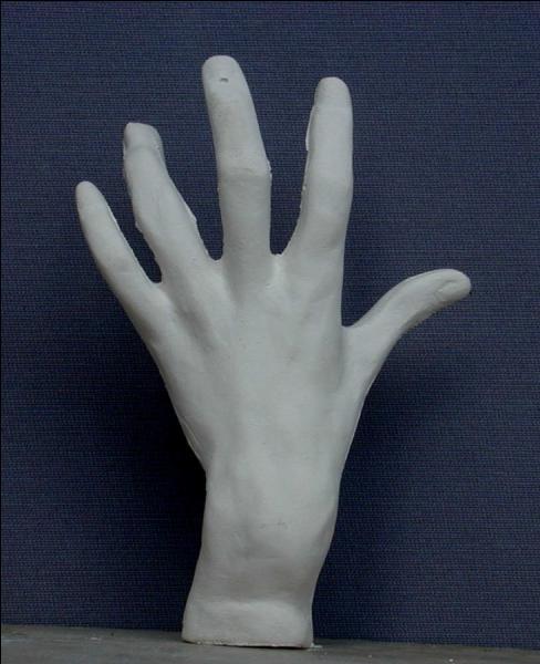 À quel endroit du corps y a-t-il un muscle  court palmaire  ?