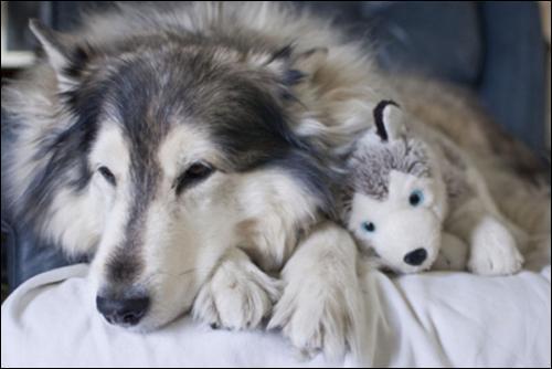 Je trouve cette scène attendrissante, une chienne et son petit, qu'en penses-tu ?