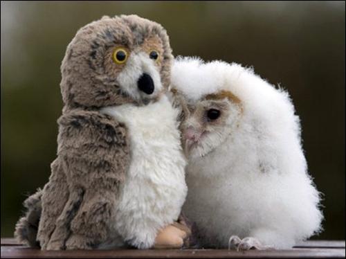 Les bébés chouettes ne sont pas toujours de la même couleur, car il y a plusieurs espèces, la preuve sur cette photo !