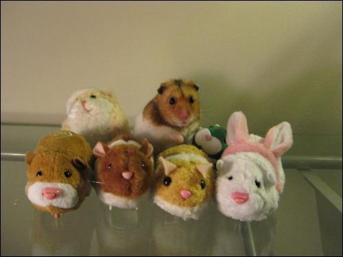 Sur cette photo on voit six peluches et un hamster !