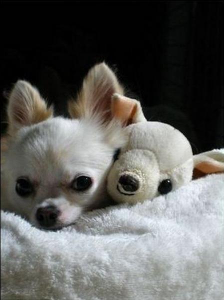 Ils sont mignons, ces deux petits chiens !