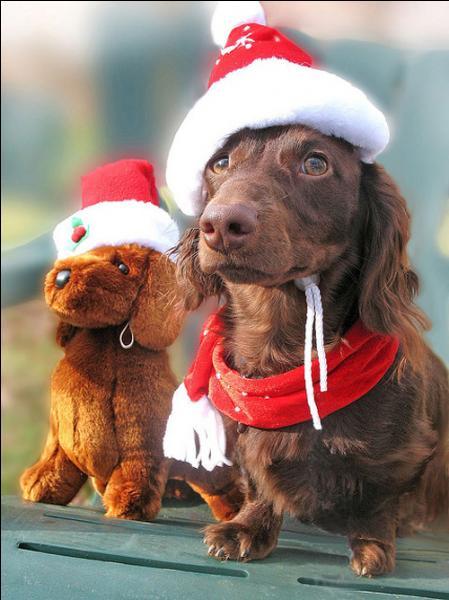 Le chien et la peluche sont déguisés, en attendant le père Noël !