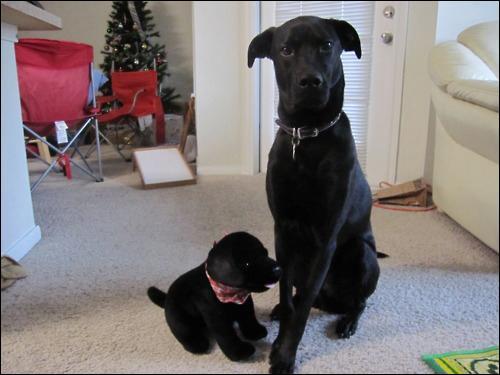 Cette chienne est très fière de son petit !