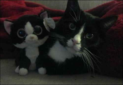 Sur cette photo on voit deux peluches, très bien imitées !