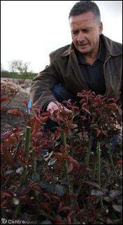 Comment appelle-t-on le métier consistant à créer de nouveaux rosiers en croisant deux variétés, ce professionnel pratiquant l'hybridation ?