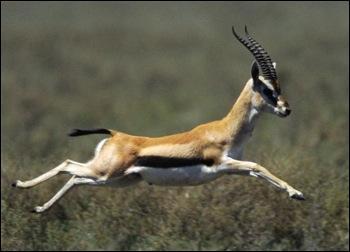 Qui était appelée la Gazelle ?