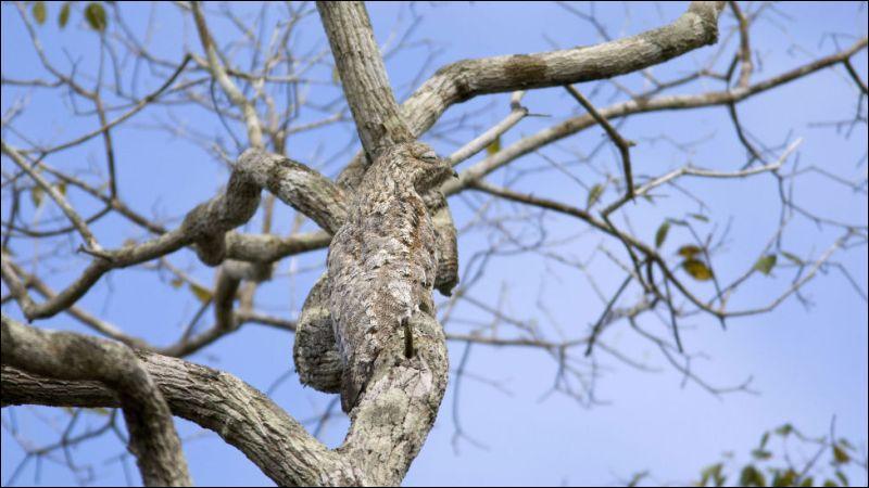 Quizz as tu un oeil de lynx 2 quiz enfants animaux - Plafond livret jeune societe generale ...