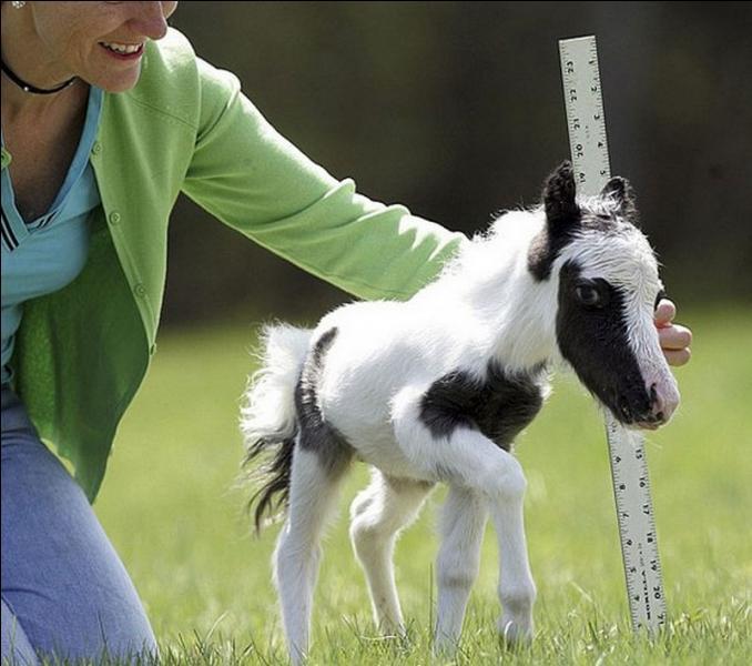 Cette photo est truquée, un cheval ne peut pas être aussi petit !