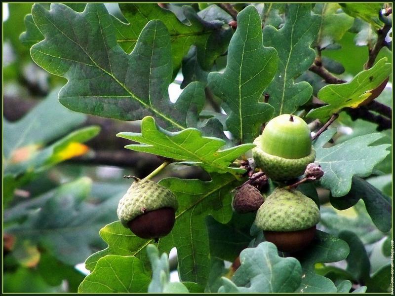 Les arbres et leurs fruits