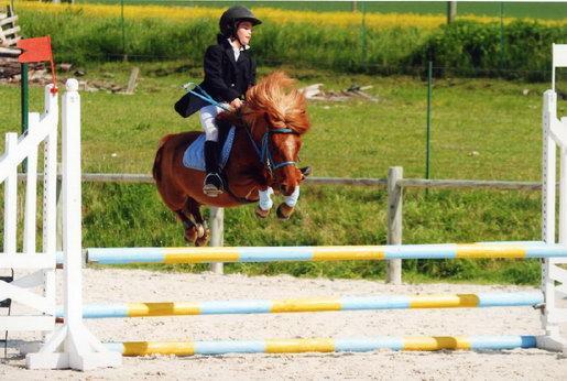 quiz chevaux galop 1 quiz qcm chevaux equitation galop 1. Black Bedroom Furniture Sets. Home Design Ideas