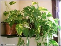 De quel personnage de la série cette plante est-elle caractéristique ?