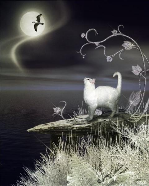 Comment appelle-t-on les animaux qui voient, alors qu'il fait nuit ?