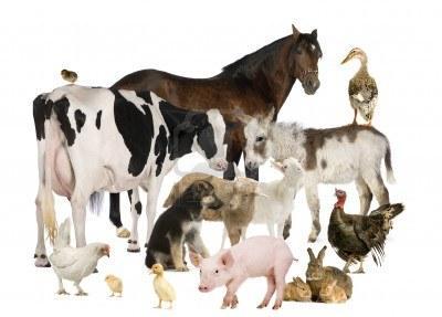Cheval, vache ou âne ?