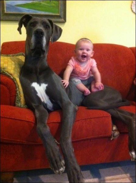 Un chien peut faire pipi debout, la tête en bas, sur deux pattes !