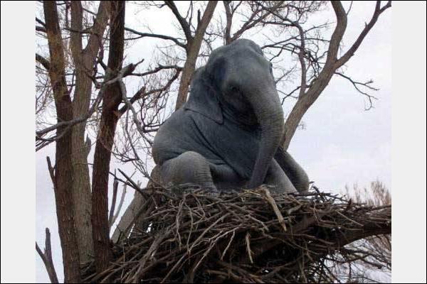 C'est incroyable, une équipe de scientifiques vient de découvrir, dans la forêt chinoise, une nouvelle race d'éléphant, dont la femelle pond des oeufs !