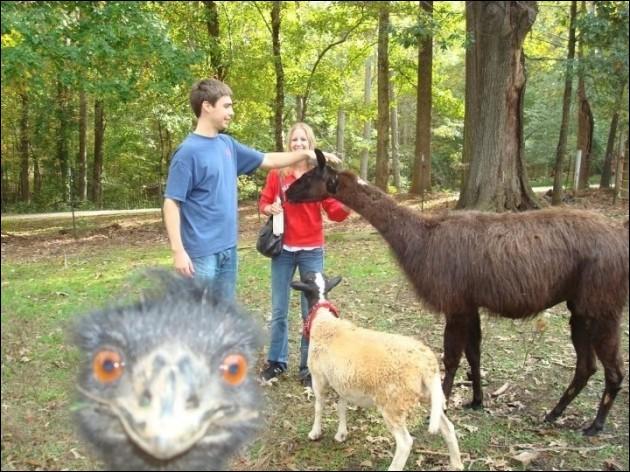 Réfléchissez bien avant de cliquer, sur cette photo, il y a deux mammifères !