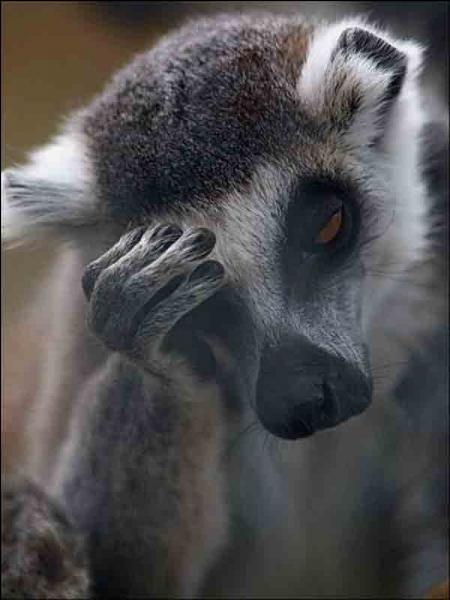 Si je vous dis que nous sommes à Madagascar, que répondez-vous ?