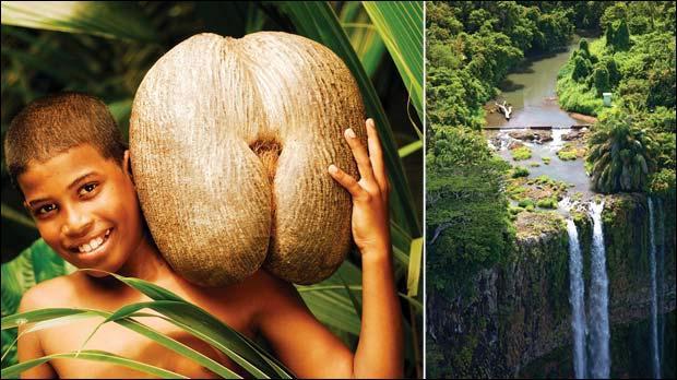 Vous voulez voir un  coco-fesses  de plus près ? Allez visiter l'île de Praslin ...