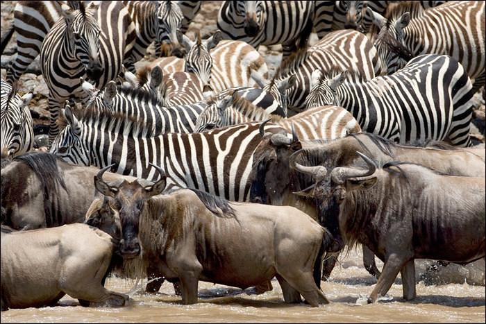 Deux pays sont concernés par cette immense migration, alors n'oubliez pas votre caméra et suivez la rivière Mara !