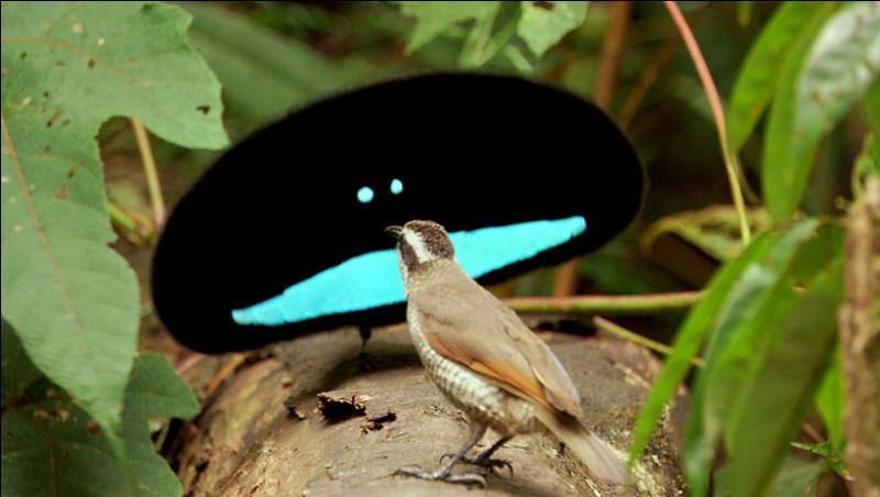 Attention à ce que vous allez répondre, cette question a déjà fait de nombreuses victimes : Oiseaux qui se réunissent par paire pour s'accoupler !