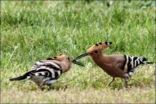 Quizz ne29 escadrilles d 39 oiseaux quiz oiseaux animaux for Oiseaux du sud de la france