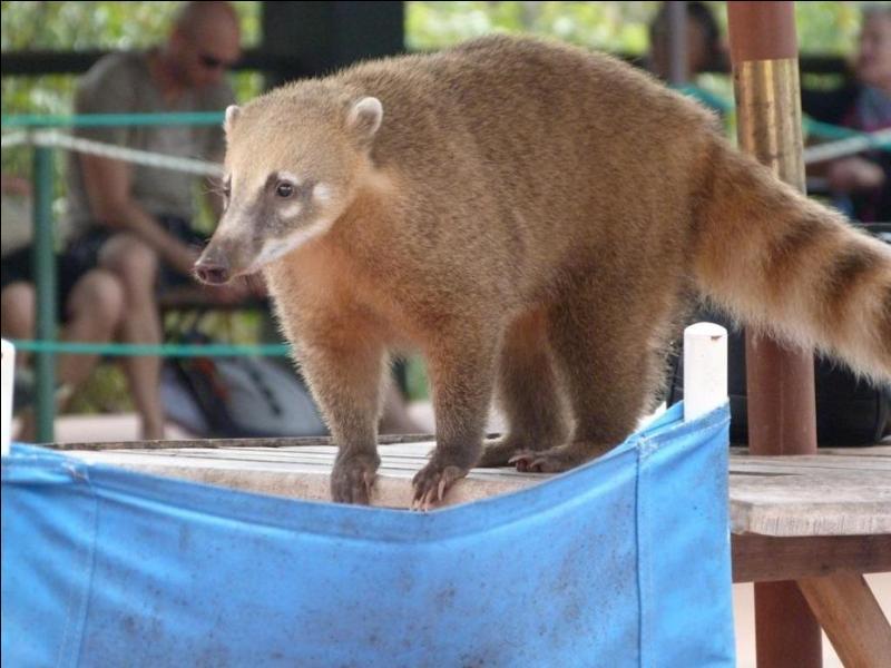 Comment s'appelle cet animal d'Amérique du Sud ?