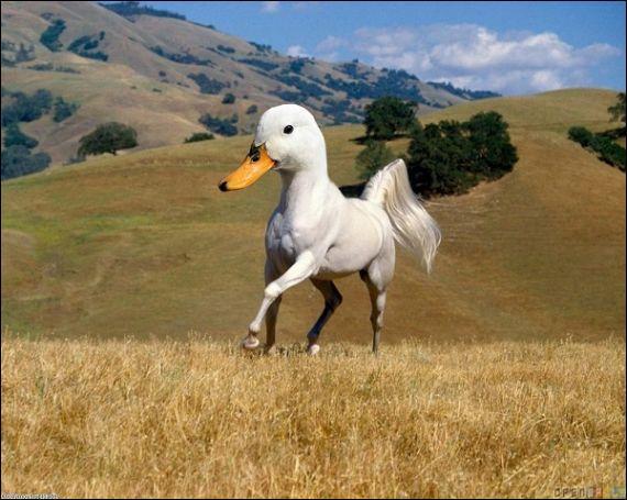 Quel nom donnerais-tu à cet étrange animal ?