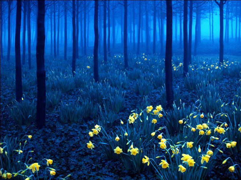 Comment appelle-t-on ce massif montagneux très boisé, situé dans le Sud-Ouest de l'Allemagne ?