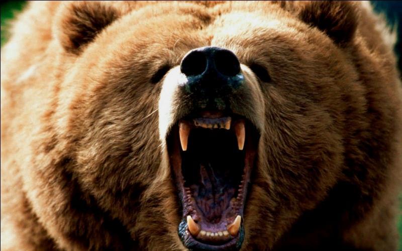 Dans ce film, cet animal coince le chasseur, mais lui laisse la vie sauve !