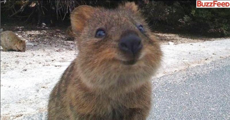 Quelle est la bonne orthographe pour ce kangourou au nom d'une boisson gazeuse ?