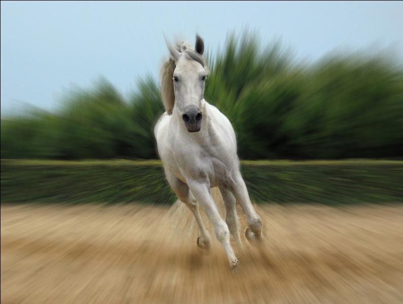 Un cheval désuni est un cheval :
