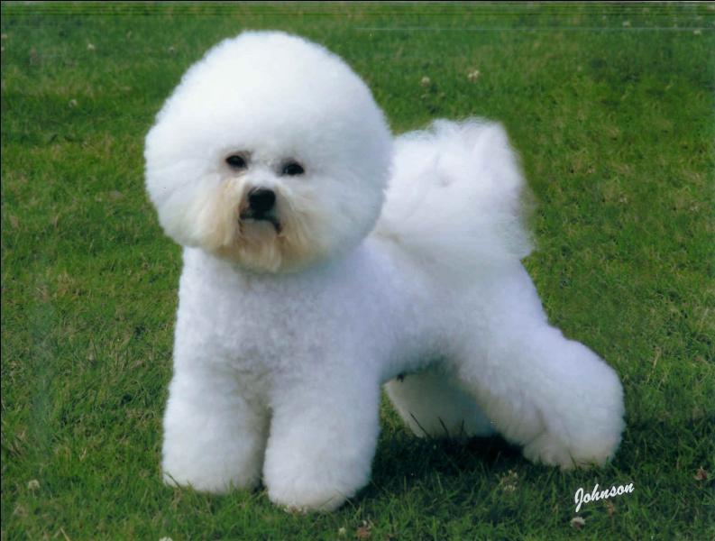 Quel est ce chien dit de luxe ?