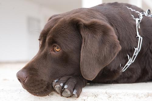 Les races de chiens (3)