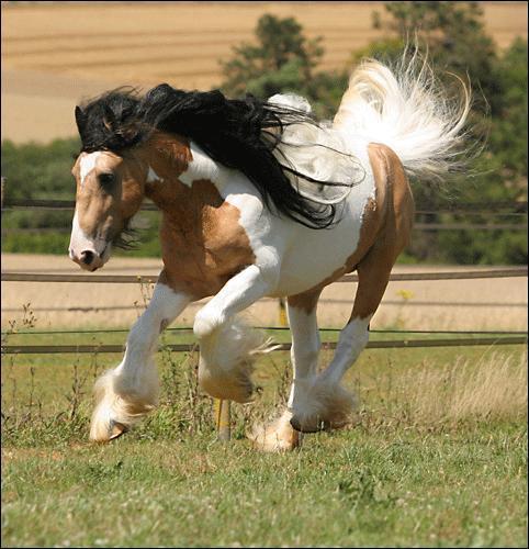Les robes de chevaux