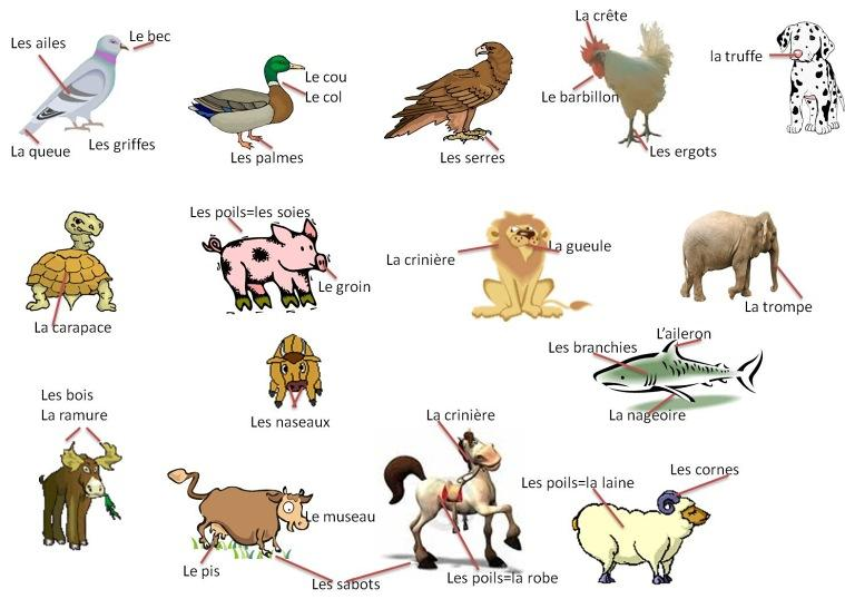 image animaux anglais