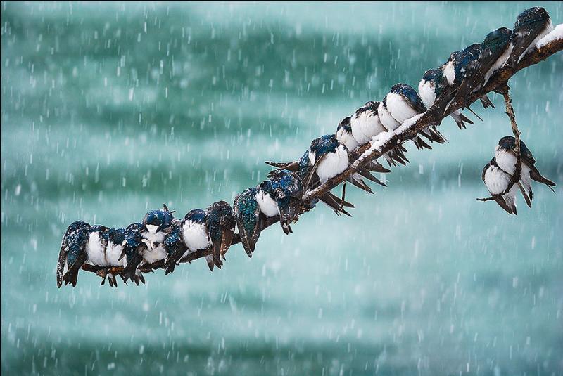 Tu as certainement déjà vu ces oiseaux !