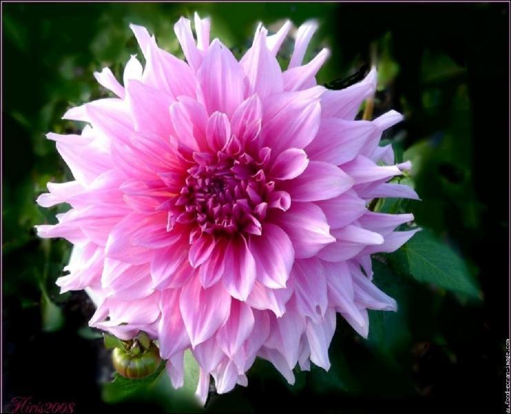Quizz les fleurs quiz fleurs photos for Les noms des fleurs